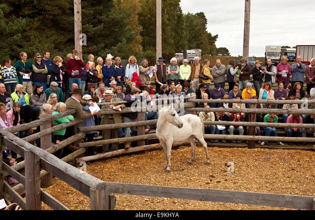New Forest Pony Sales - Stock Image
