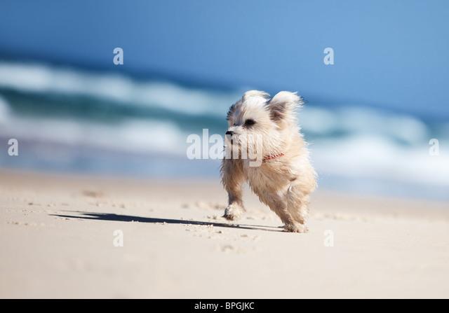 Dog Beach Bunbury