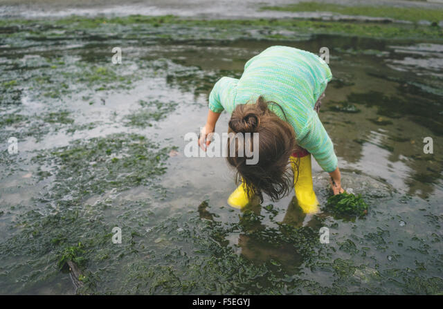 Girl picking seaweed in shallow water - Stock Image