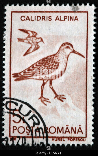 1991 Posta Calidris Alpina bird Egret Aurel Popescu brown Stamp - Stock Image