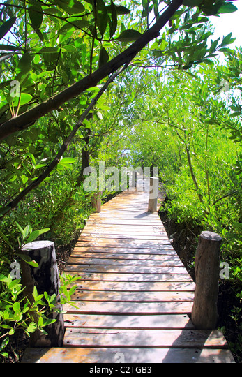 mangrove forest walkway jungle Quintana Roo mexico - Stock-Bilder