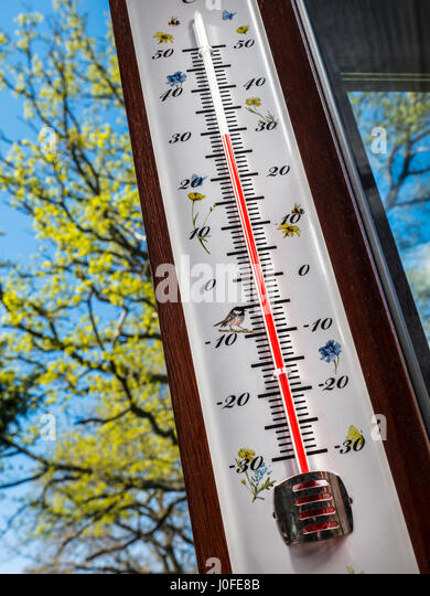 Garden themed Thermometer displays sunny 30 degrees centigrade hanging in garden room, with oak tree in first spring - Stock Image