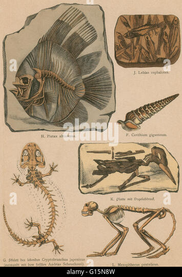 Lithograph print from a rare work by G.H. Schubert entitled, Illustrated Geology and Paleontology, 1886. This series - Stock Image