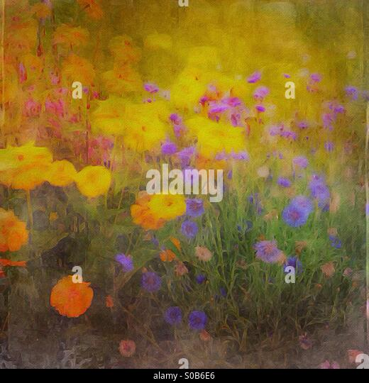 Garden of colorful flowers - Stock Image