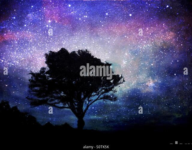 Tree in Silhouette with a Starry Purple Blue Sky - Stock Image
