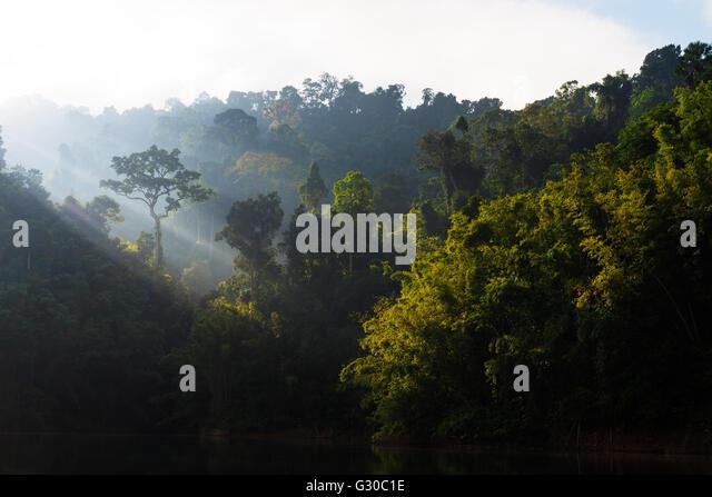 Khao sok southeast asian stream biotope