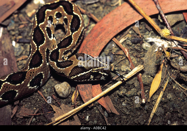 common snakes in india India's tropical conditions play the perfect host to a wide variety of snakes -- approximately 300 species, including 50 venomous varieties recently, eminent naturalist and wildlife adventurer nigel.
