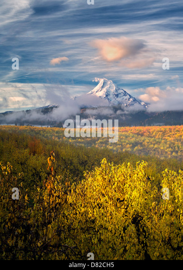 Pear orchard in fall color and Mt. Hood. Hood River Valley, Oregon - Stock-Bilder