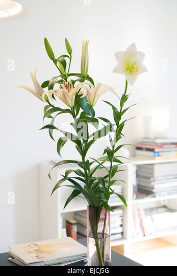 Fresh lilies arranged in vase - Stock Image