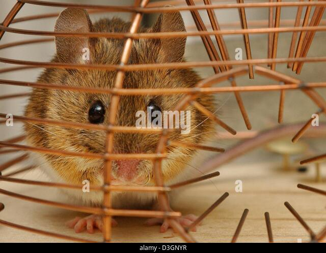 how to set a mousetrap instructions
