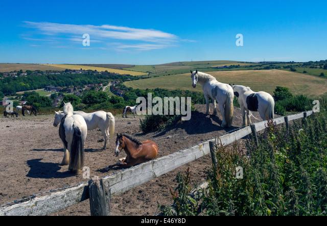 Horses on the South Downs near Brighton Racecourse, England, UK - Stock Image