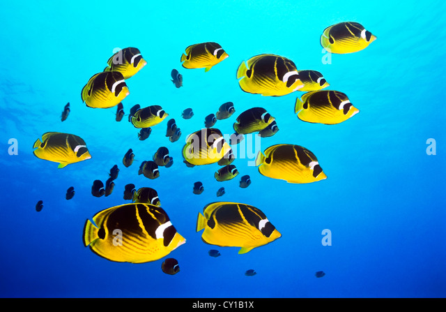 Big Island Hawaii Site Redfin Com