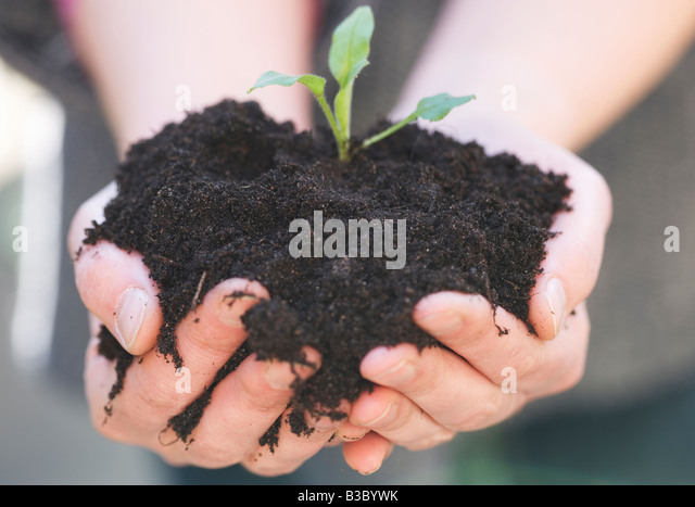 Hand's filled with soil and a seedling plant - Stock Image