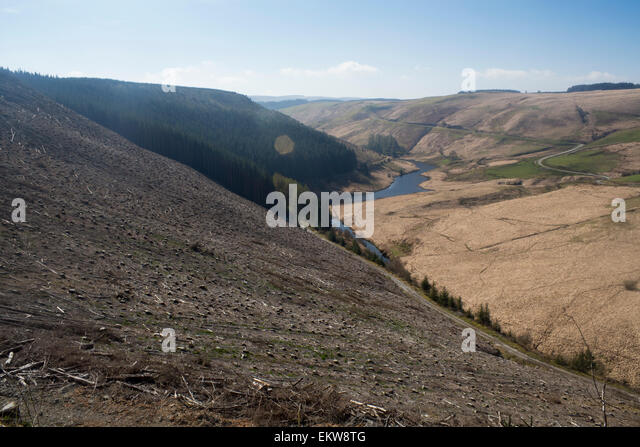Deforestation in remote Welsh countryside near Llyn Brianne Ceredigion Mid Wales UK - Stock Image
