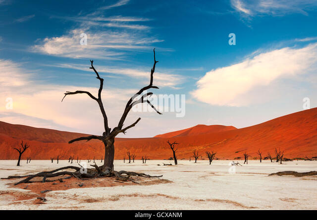View of the Deadvlei in Namibia, Africa - Stock-Bilder