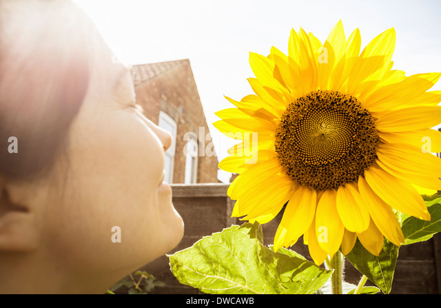 Close up of mature woman and sunflower - Stock Image