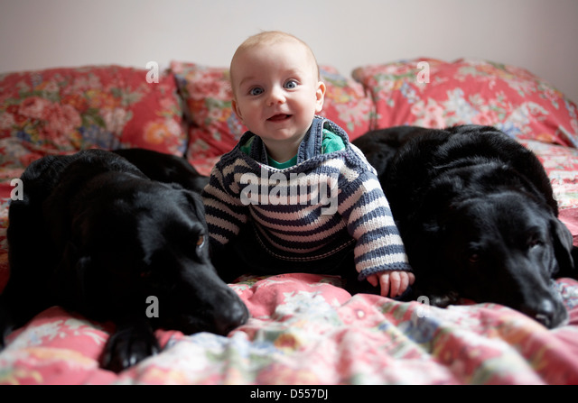 Baby sitting with dogs on sofa - Stock Image