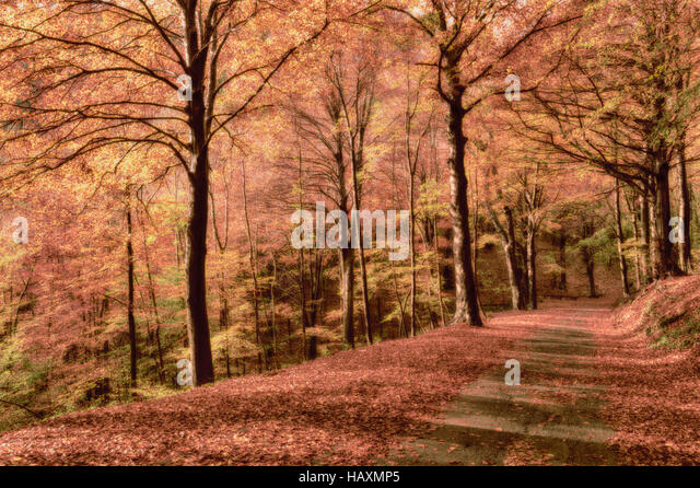 autumn season, colors and shades of nature in the forest - Stock Image