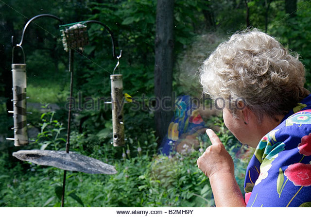 Indiana Chesterton Indiana Dunes State Park Nature Center woman senior bird watching feeder observation window habitat - Stock Image