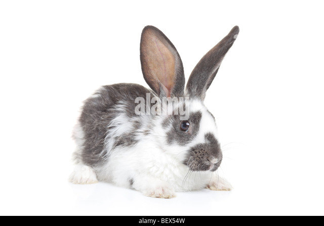 A rabbit isolated on white background - Stock Image