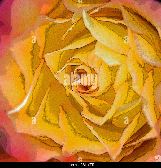 CLOSE UP OF ROSE - Stock Image