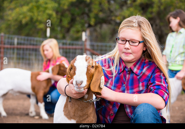 Farm girls taking care of livestock goats, petting and grooming for a stock show - Stock Image