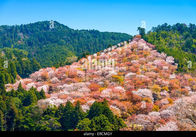 Yoshinoyama, Nara, Japan spring landscape. - Stock-Bilder