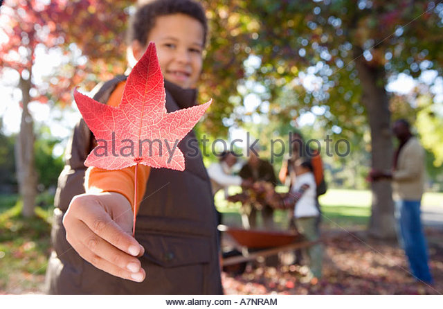 Multi generational family collecting autumn leaves in garden focus on boy 7 9 holding red maple leaf in foreground - Stock Image