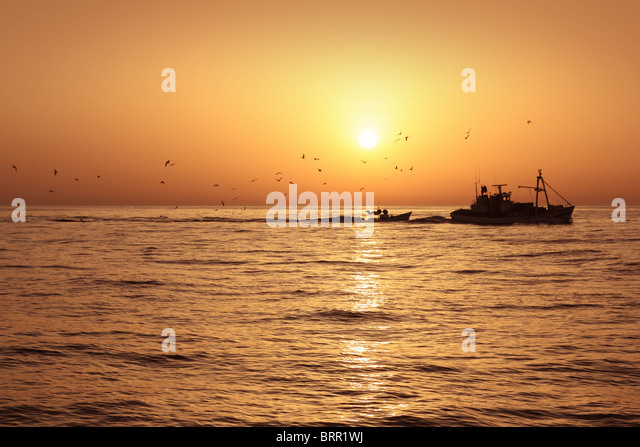 Fisher boat professional sardine catch fishery sunrise backlight with seagulls flying - Stock Image