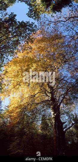 Deciduous Trees - Stock Image