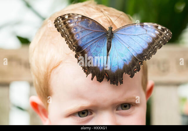 London, UK. 30th March, 2017. Live tropical butterflies fill the butterfly house for the returning 'Sensational - Stock Image