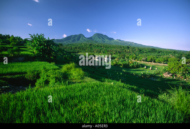 Indonesia Bali terraced rice fields Mt Agung volcano - Stock Image