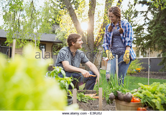 Couple harvesting vegetables in garden - Stock Image
