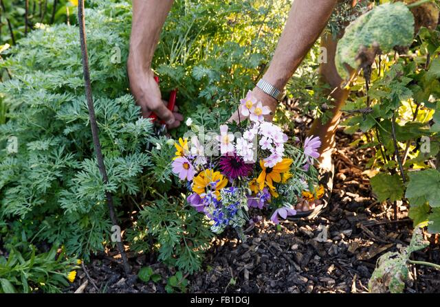 Mature woman gardening, low section - Stock Image