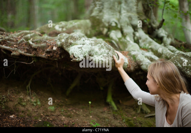 Woman touching large tree roots - Stock Image