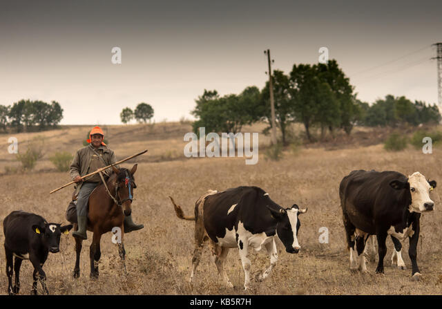 Yambol Province, Bulgaria. 28th Sep, 2017. Grey sky over the open plains of Yambol as herdsman returns with his - Stock Image