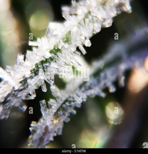 Frosted grass macro - Stock Image
