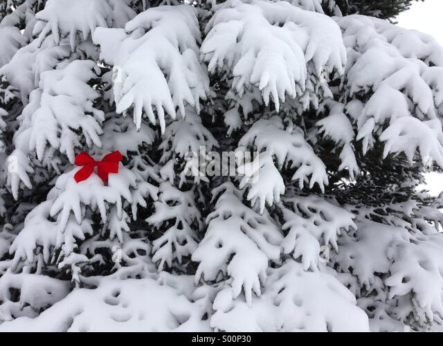 A red bow on the fresh snow of a pine tree. - Stock-Bilder