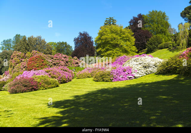 landscape of gardens with trees and flowers of azalea in spring season, blue sky in background - Stock Image