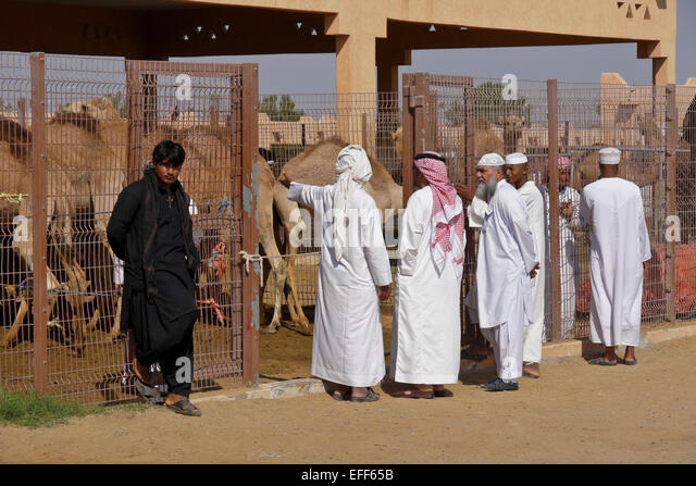 Men buying camels for meat at camel market, Al-Ain, Abu Dhabi, United Arab Emirates - Stock Image