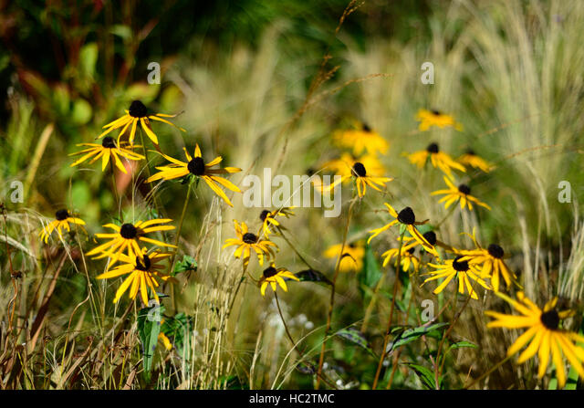 Mixed grass prairie stock photos mixed grass prairie for Grasses planting scheme