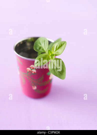 Oregano in a cup, close up - Stock Image