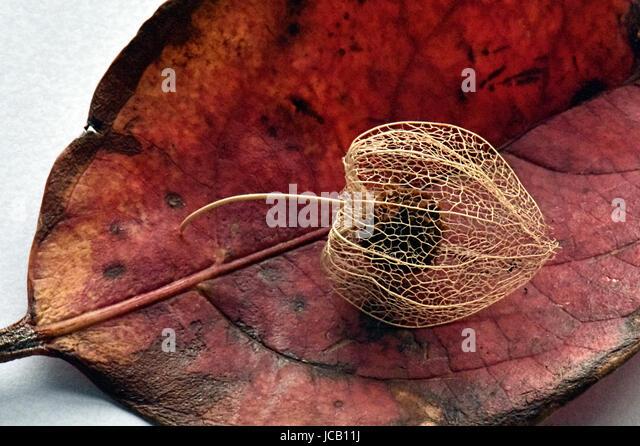 Autumn, Winter - Stock Image