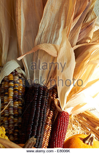 Cheerful and Colorful dried Indian Corn - Stock Image