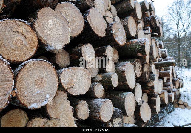 Timber Merchant Stock Photos Amp Timber Merchant Stock