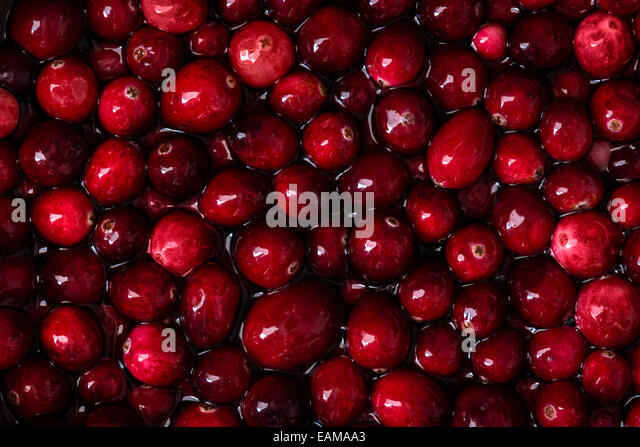 Macro detail shot of cranberries in water. - Stock Image