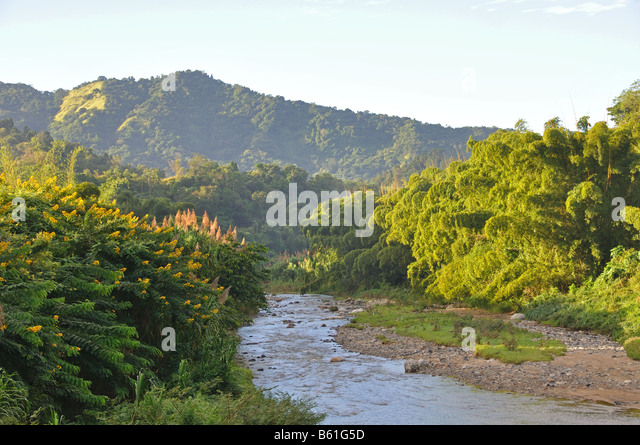 a river cuts through the lush rain forest high up in the puerto rico mountains - Stock Image