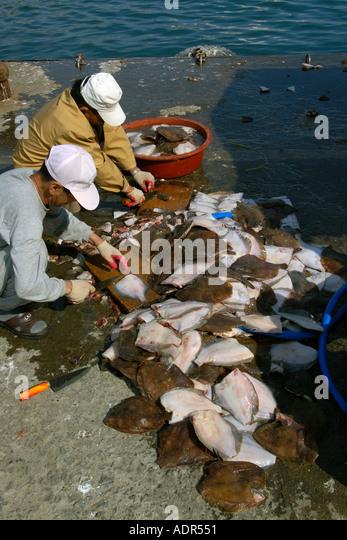 Agonize stock photos agonize stock images alamy for Nearest fresh fish market