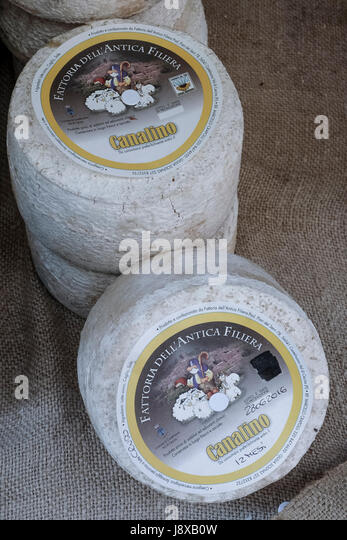 Typical pecorino cheese from Castelnuovo di Val Cecina,Tuscany,Italy,Europe - Stock Image