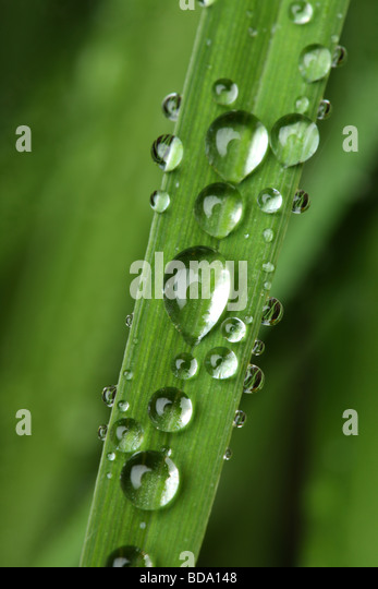 Close up of plant with water droplets - Stock Image